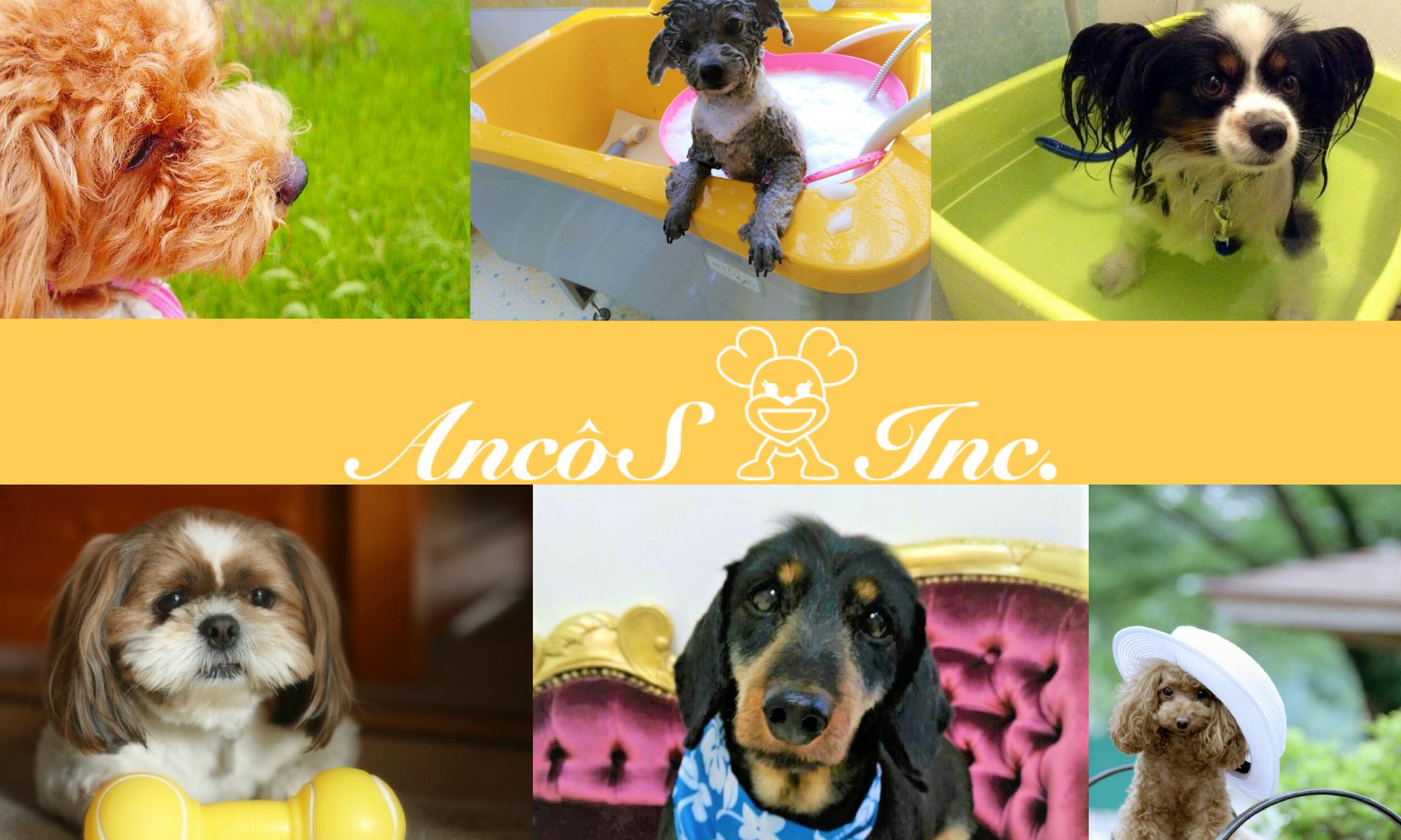 AncoS-アンコーズ-|大阪府守口市のドッグトリミングサロン/犬